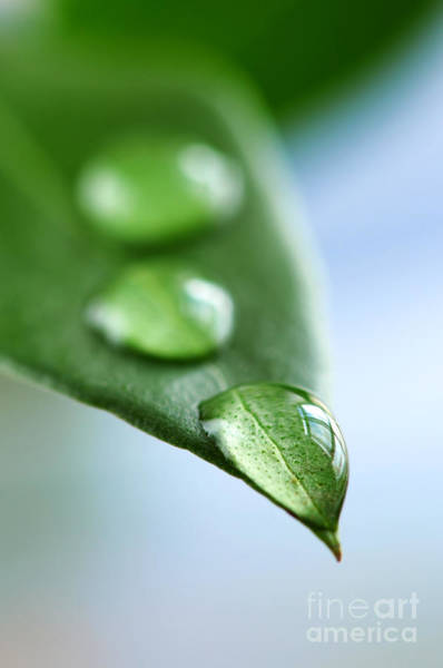 Green Leaf With Water Drops Poster