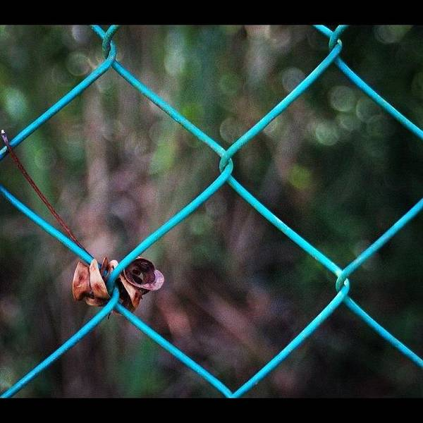 Hanging To The Fence, By My Lens Poster