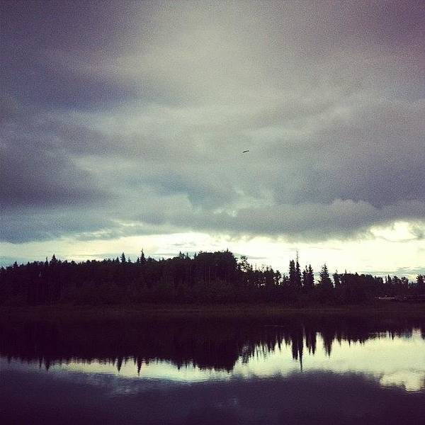 #hawk #pond #clouds #peaceful #trees Poster