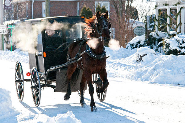 Horse And Buggy In The Snow Poster