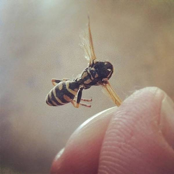 I Caught This #wasp In Mid Air With My Poster