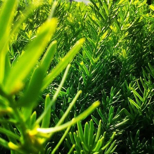 I Love The Color Green. #ilovegreen Poster