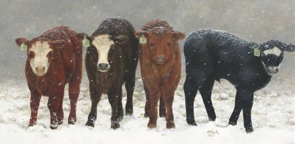Inquisitive Calves Poster
