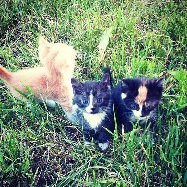 #kittens #kitten #cute #precious Poster