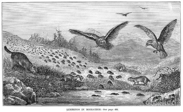 Lemming Migration Poster