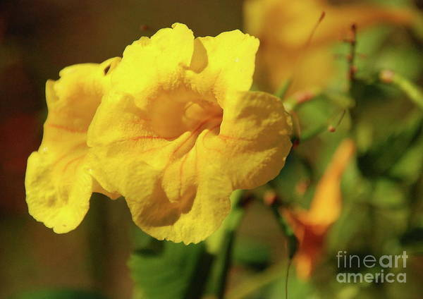 Lemony Yellow Poster