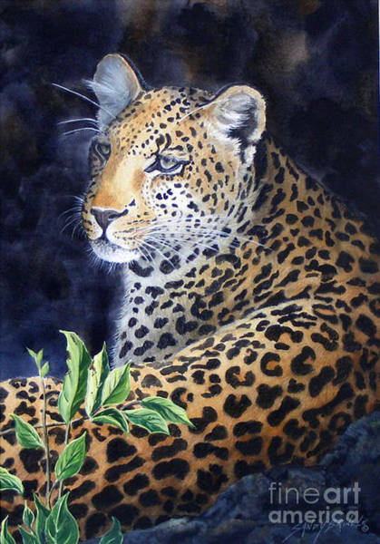 Leopard  Sold  Prints Available Poster