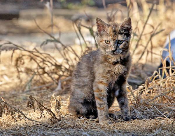 Lone Feral Kitten Poster