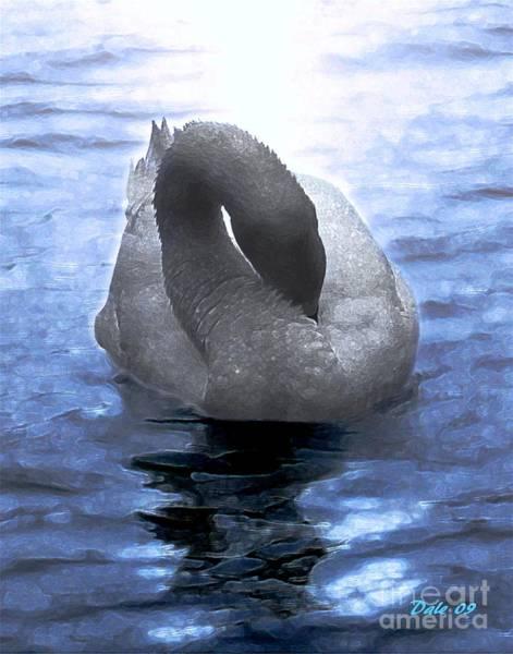 Magical Swan Poster
