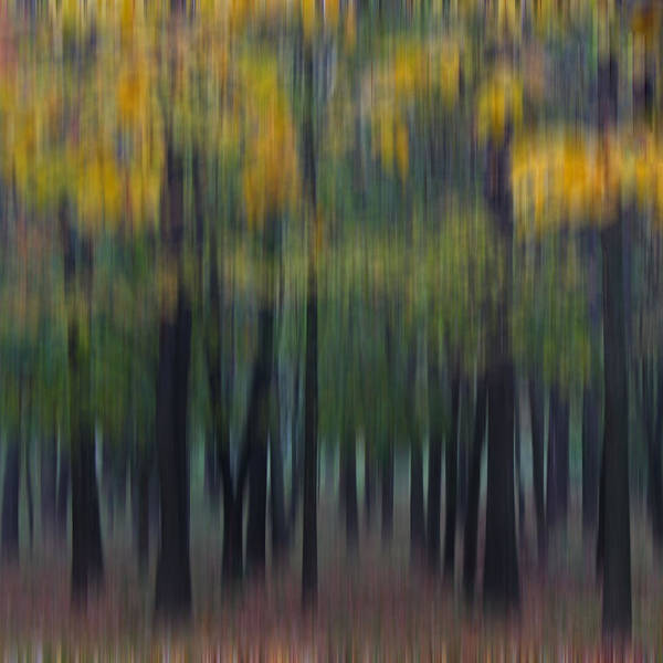 Poster featuring the photograph Midwest Autumn by Darlene Bushue