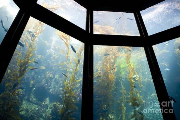 Monterey Bay Aquarium, Monterey, California, Ca Poster