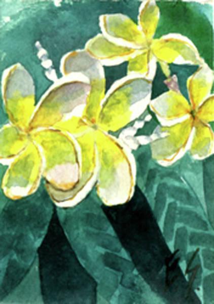 More Plumeria Poster