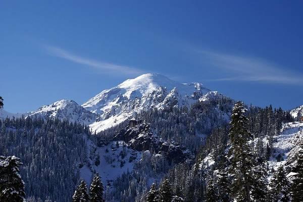 Mt. Rainier In Contrast Poster
