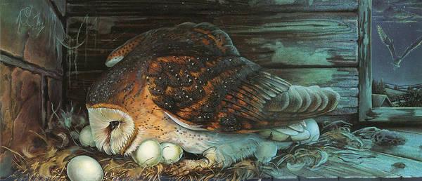 Nesting Owl Poster