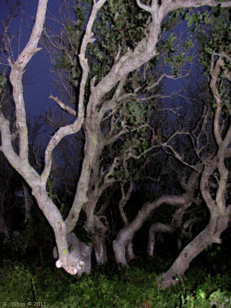 Night Branches Poster