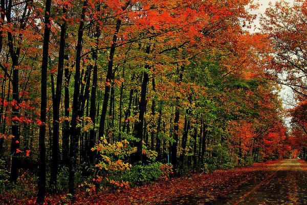 Northern Michigan Autumn 5 Poster