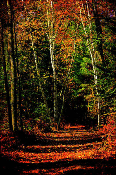Northern Michigan Forest 4 Poster