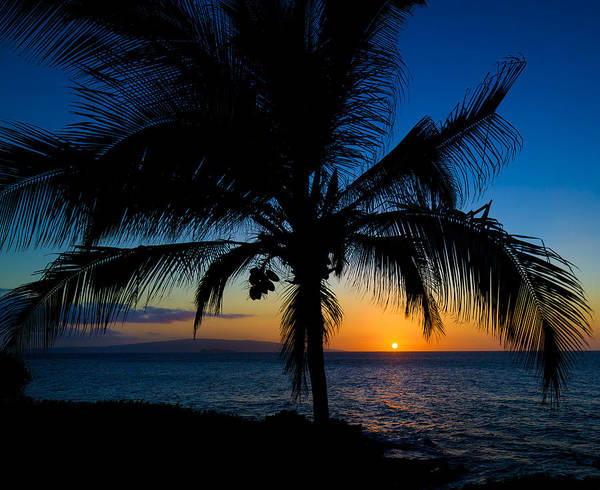 Poster featuring the photograph Palm Sunset by David Buhler