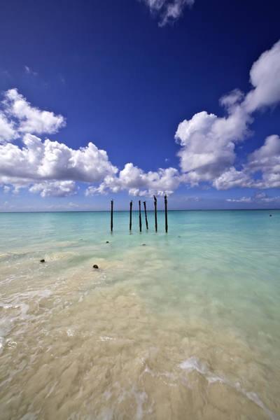 Pelicans Of Sunny Aruba Poster