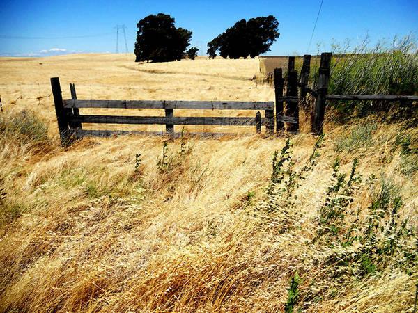 Prairie Wheat Grass Poster