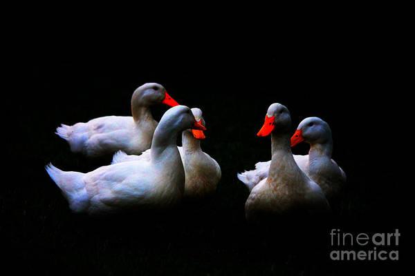 Quackery Quintet Poster
