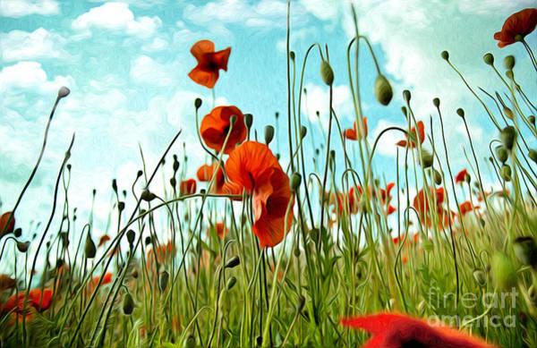 Red Poppy Flowers 03 Poster