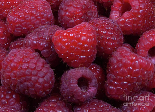 Red Raspberries Poster