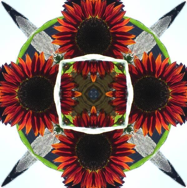 Red Sunflower And Feather Poster