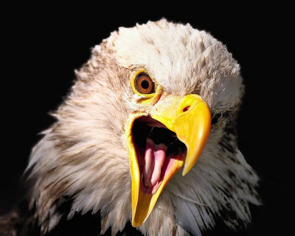 Screaming Eagle II Black Poster