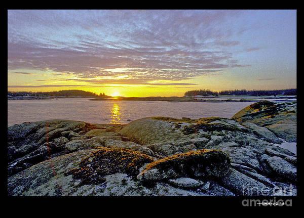 Seaweed Sunrise Poster