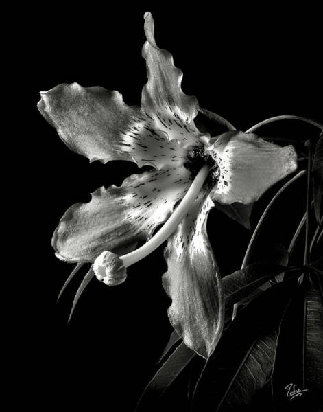 Silk Flower In Black And White Poster