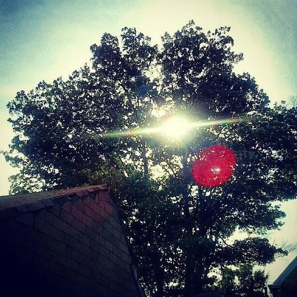 #sky #trees #sun #sunset #leaves Poster