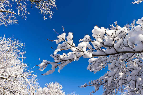 Snowy Trees And Blue Sky Poster