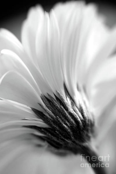 Poster featuring the photograph Soft Gerbera by Kate McKenna