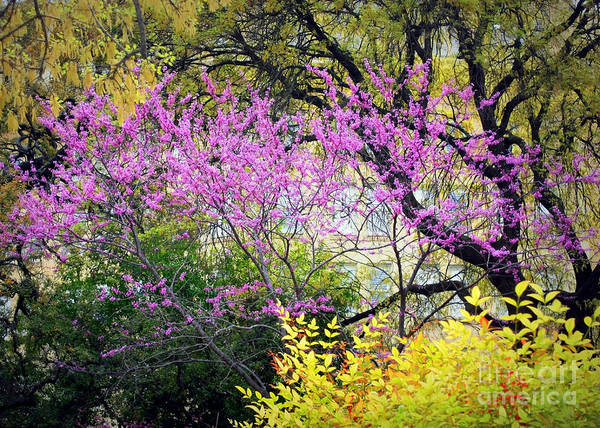 Spring Trees In San Antonio Poster