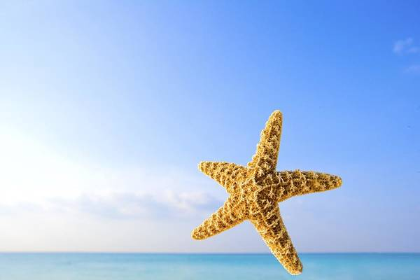 Starfish In Front Of The Ocean Poster