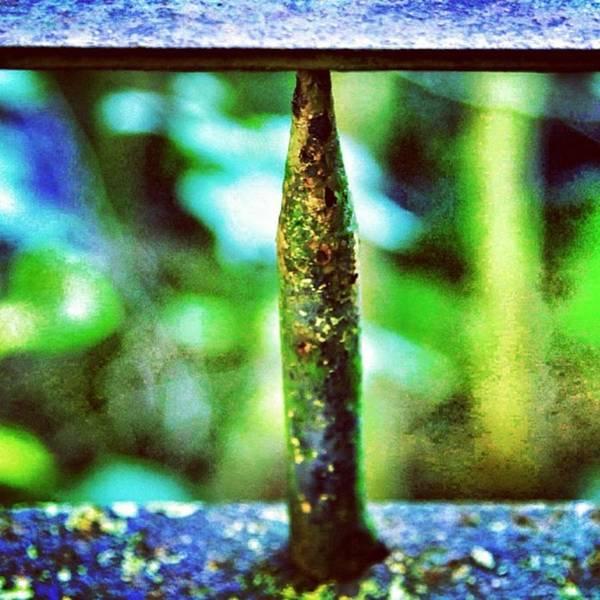 #texture #detail #colour #color #green Poster
