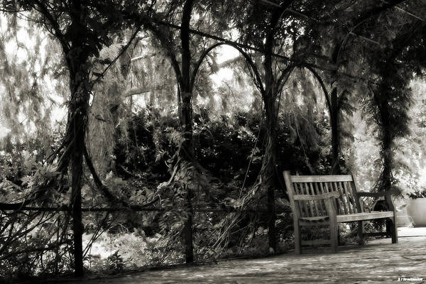 Tranquil Leaf Covered Walkway In Black And White Poster