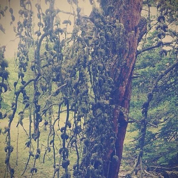 #tree #rotting #dead Poster