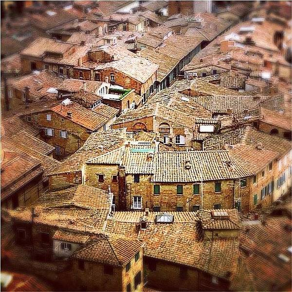 Under The Tuscan Sun.. #siena #rooftops Poster