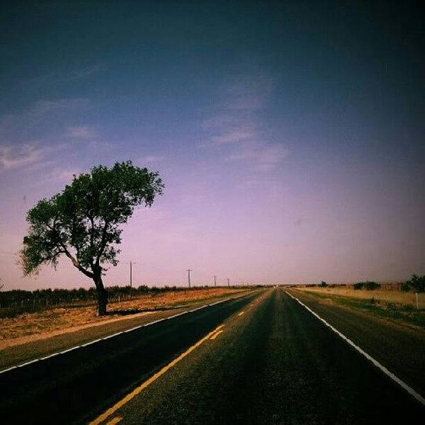 #usa #america #road #tree #sky Poster