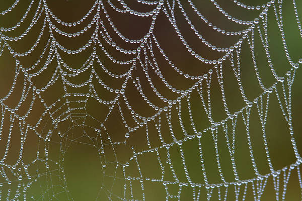 Web With Dew Poster