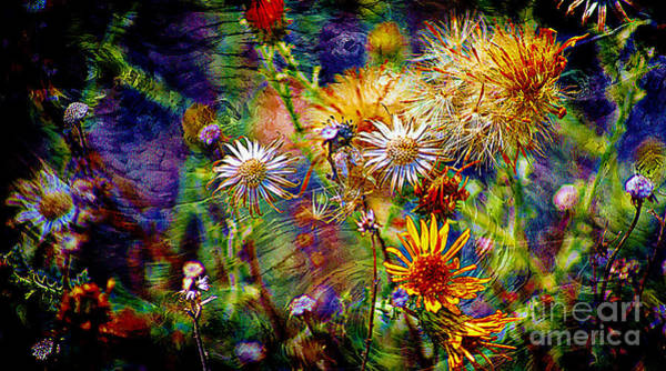 Wild Desert Flower Universe Poster