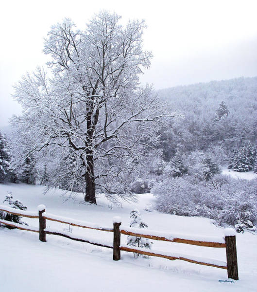 Winter Tree And Fence In The Valley Poster