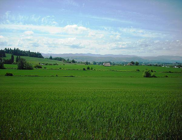 Yamhill Countryside Poster