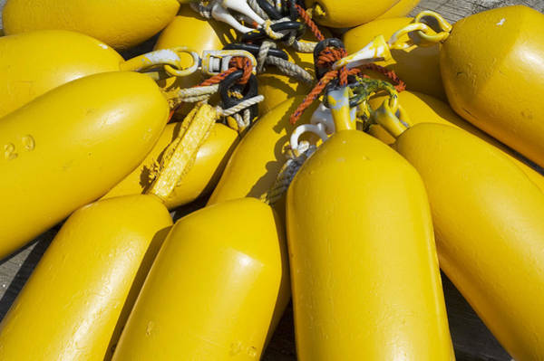 Yellow Buoys Poster
