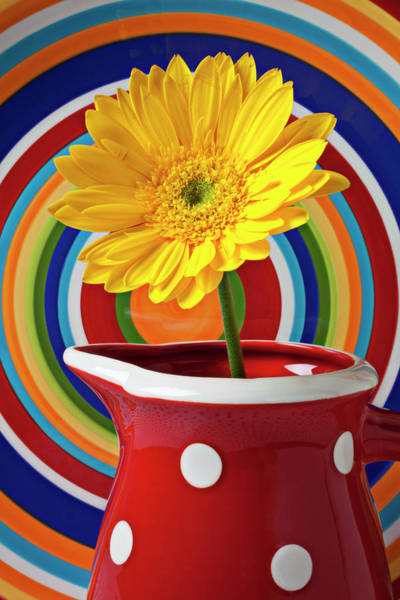 Yellow Daisy In Red Pitcher Poster