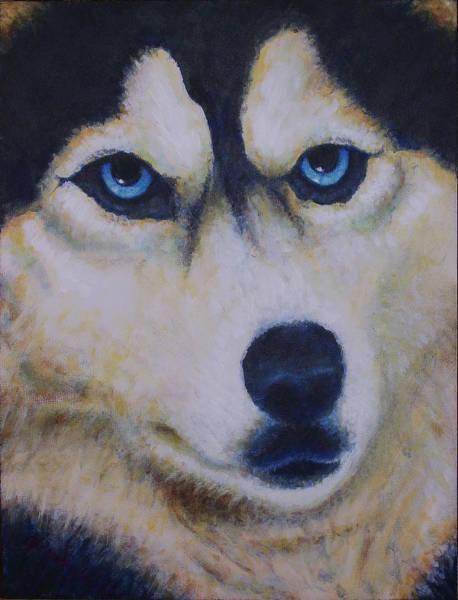 Husky For Cyrus Poster