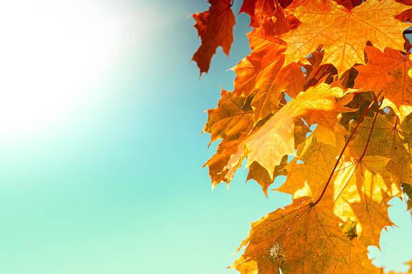Yellow Autumn White Sun Poster
