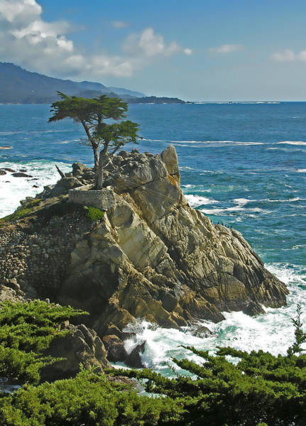 Poster featuring the photograph Cypress Point Ll by Rich Stedman